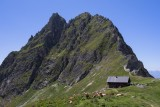 bassedef-patp-refuge-du-grand-bec-ete18-26-17953