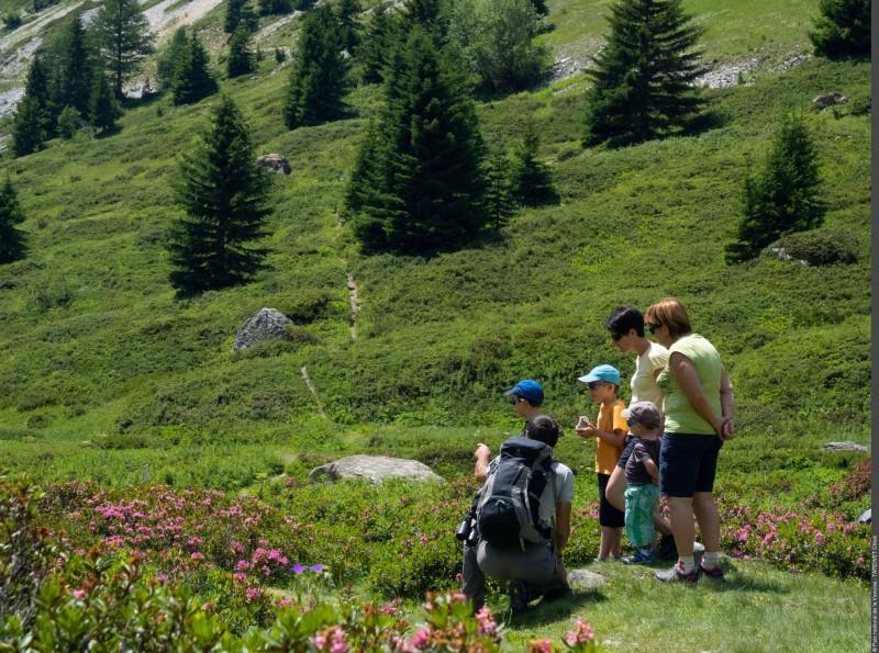 Prairies alpines et pâturage